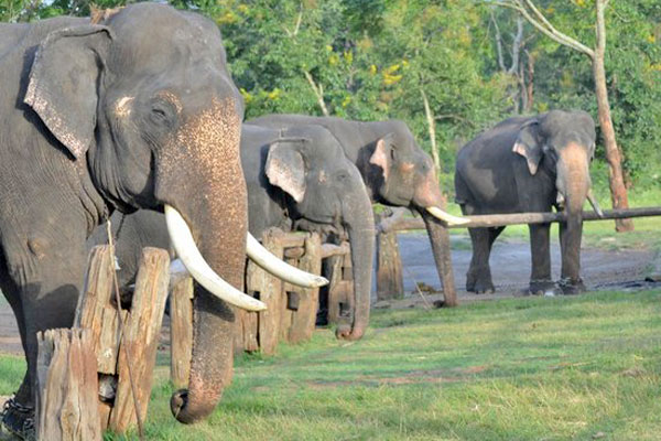 theppakadu-elephant-camp